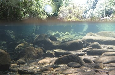 saúde dos ríos galegos