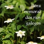 flora nemoral